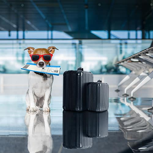 How to Fly with your dog | Budget Airfare