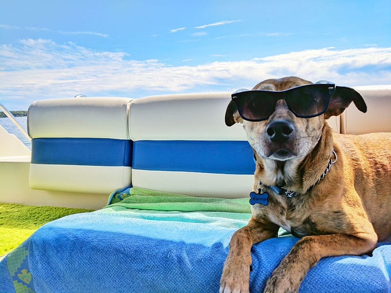 How to travel with a dog | Budget Airfare
